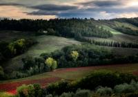 Vigne-Toscane