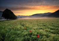 Marrucci-Michele-Heroes_s-Sunrise