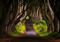 Michele-Marrucci-Trees